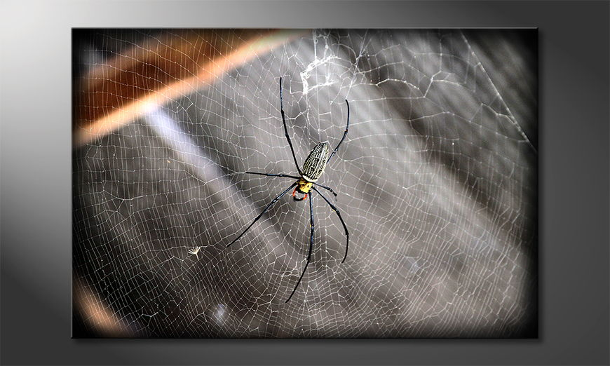 Le-tableau-imprimé-Beautiful-Spider