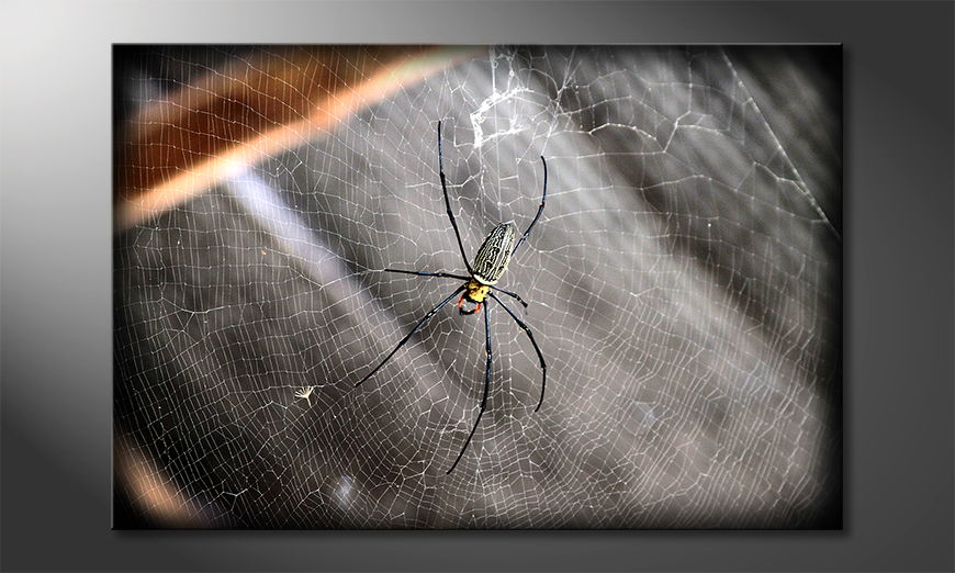 Le tableau imprimé  Beautiful Spider