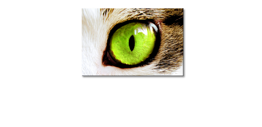 Le-tableau-mural-Cats-�Eye