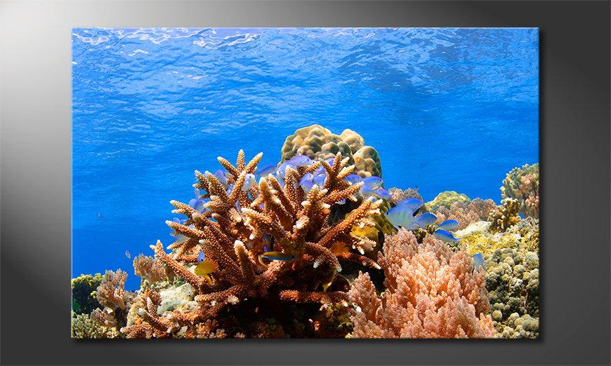 Le tableau mural Corals Reef