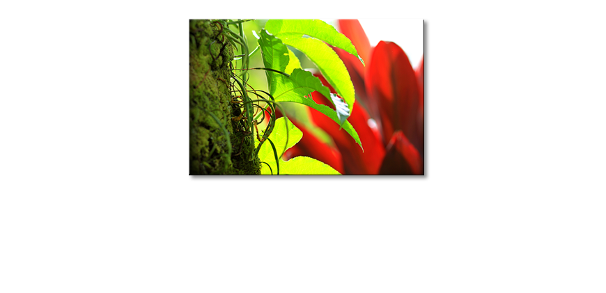 Le-tableau-mural-Red-Green-Nature