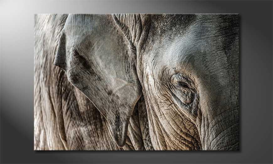Limpression-sur-toile-Eye-of-Elephant