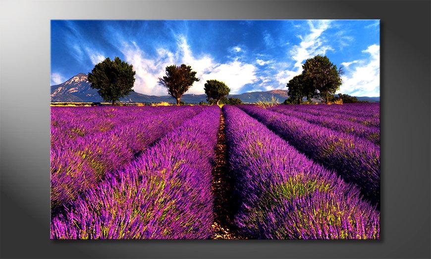 L'impression sur toile Lavender