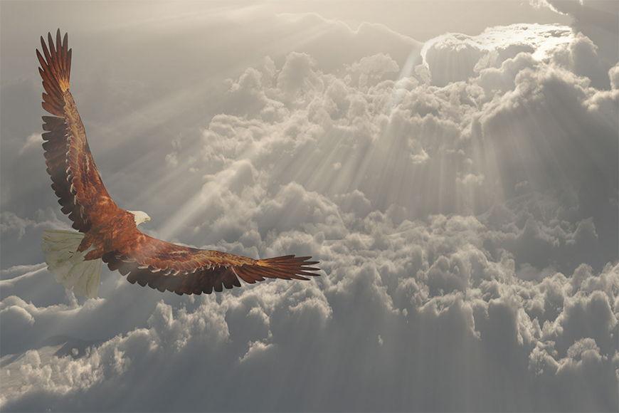 Papier peint Aigle en vol 120x80cm et plus