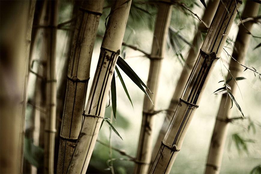 Papier peint Bamboo 120x80cm et plus