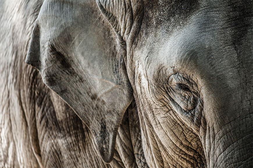 Papier peint Peau d'éléphant 120x80cm et plus'